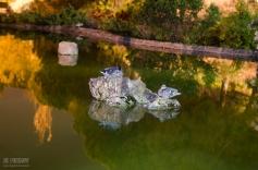 11 de Junio de 2013,Arroyo de La Represa,Patos Descansando